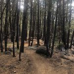 Afternoon Delight Trail in Sunriver Oregon
