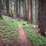 Alpine MTB Trail, Oakridge, Oregon
