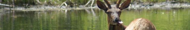 Elk Pond Cascade Lakes