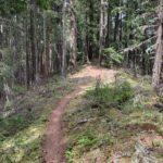 Larison Rock Trail in Oakridge