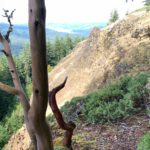 Lawler Trail in Oakridge