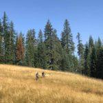 Little Bunchgrass Trail Oakridge