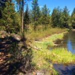 MTB Fall River La Pine State Park