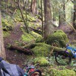 Middle Fork Trail in Oakridge Oregon