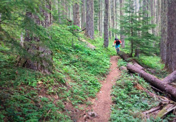 Mountain Biking the Cascade Crest in Oregon