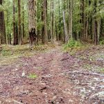 Mountain Biking the Santiam Wagon Road Trail