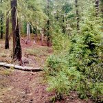 Santiam Wagon Road MTB Trail