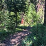 Scotty Creek Trail