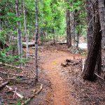 A Twisty Bend Trail