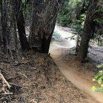 Tiddlywinks Trail Berms