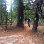 Tiddlywinks Trail at Wanoga