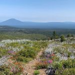 Metolius-Windigo Trail 99