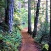 Upper Mckenzie River Trail