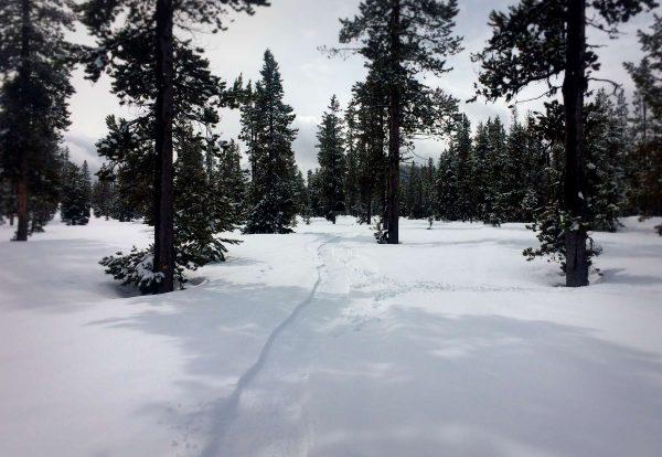 Wanoga Snow Bike Trails
