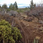 Coyote Loop Mountain Bike Trail