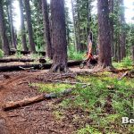 Metolius-Windigo Trail