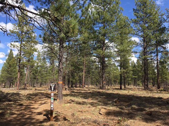 Looking from Flaming Chicken to Phil's. Trees have more water and more room to grow, and light hitting the ground will encourage native grasses and shrubs. Can't wait to come back and see this continue to evolve in the next several years!
