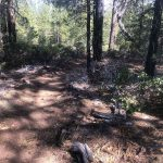 Roundabout MTB Trail in Sunriver