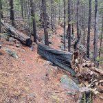 Swamp Wells Mountain Bike Trail