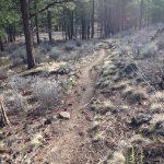 Swamp Wells Trail