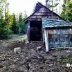 Swampy Shelter