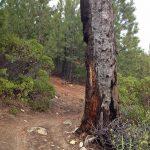 Tumalo Ridge Tree